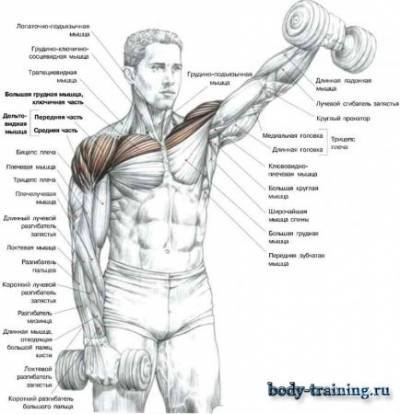 Тренировка плечей в домашних условиях